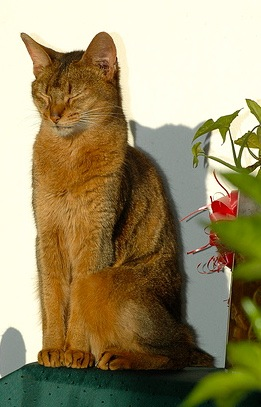 One of his favorite things... Georgie enjoying the Costa Rica sun perched in the garden.